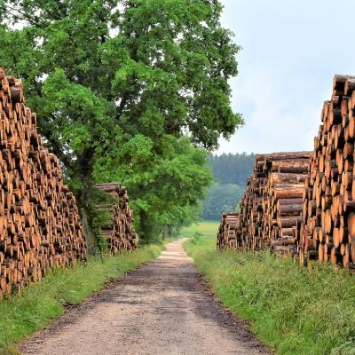 Festo per l'industria del legno